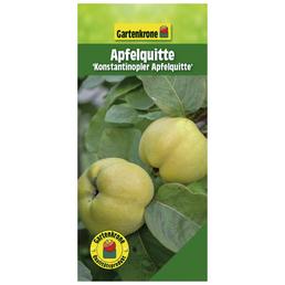GARTENKRONE Apfelquitte, Cydonia, Früchte: süß-säuerlich, zum Verzehr geeignet