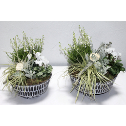GARTENKRONE Arrangement, Betonschale weiss/schwarz, herbstlich bepflanzt, Durchmesser: 30 cm