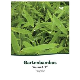 Bambus, Gartenbambus, Fargesia, Asian Art