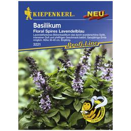 KIEPENKERL Basilikum basilicum Ocimum