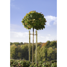 MR. GARDENER Baumpfahl, Grün, kesseldruckimprägniert, 150 cm