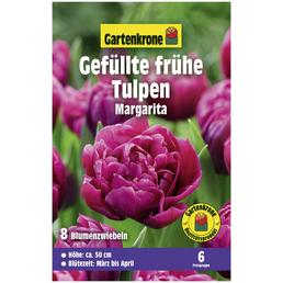 GARTENKRONE Blumenzwiebel »Gartenkrone Tulpe Margarita«