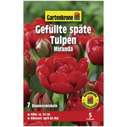 GARTENKRONE Blumenzwiebeln Gefüllte Späte Tulpe, Tulipa X hybrida »Miranda«, Blütenfarbe: rot