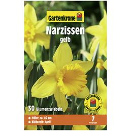 GARTENKRONE Blumenzwiebeln Narzisse, Narcissus pseudonarcissus, Blütenfarbe: gelb