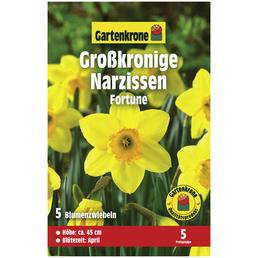 GARTENKRONE Blumenzwiebeln Narzisse, Narcissus pseudonarcissus »Fortune«, Blütenfarbe: zweifarbig
