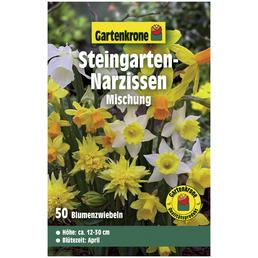 GARTENKRONE Blumenzwiebeln Steingarten-Narzisse, Narcissus pseudonarcissus »Mischung«, Blütenfarbe: bunt