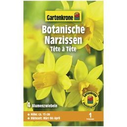 GARTENKRONE Botanische Narzisse Narcissus Cyclamineus »Tête à Tête«, gelb
