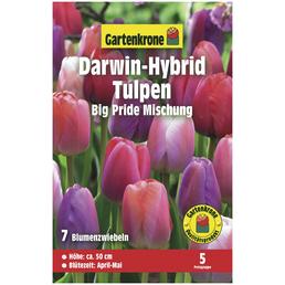 GARTENKRONE Darwin-Hybrid-Tulpe Tulipa X hybrida »Big Pride Mischung«, zweifarbig