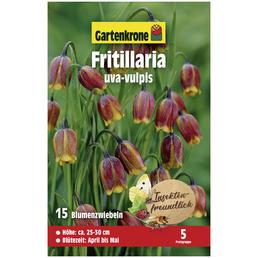 GARTENKRONE Gartenkrone Fritillaria uva-vulpis, Gelb-Braun, 15