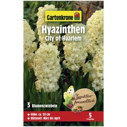 GARTENKRONE Gartenkrone Hyazinthe City of Haarlem, Hellgelb, 3