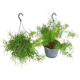 GARTENKRONE Grünpflanzenampel-Mix