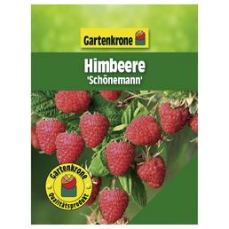 GARTENKRONE Himbeere Rubus idaeus »Schoenemann«