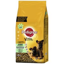 PEDIGREE Hundetrockenfutter »Vital Protection Maxi«, Inhalt: 15 kg, Huhn/reis
