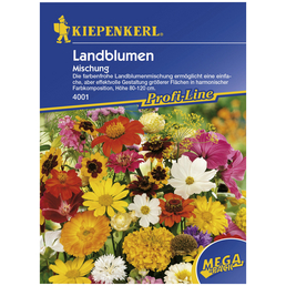 Kiepenkerl Blumenmischung Blütenteppich