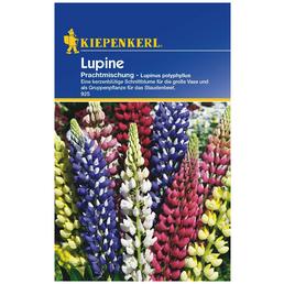 Kiepenkerl Saatgut, Lupine, Lupinus Polyphyllus Mix, Mehrjährig