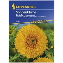 Kiepenkerl Saatgut, Sonnenblume, Helianthus annuus Santa Fe, Einjährig