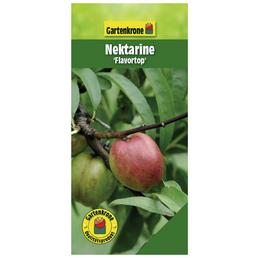 GARTENKRONE Nektarine, Prunus nucipersica »Flavortop«, Früchte: süß, zum Verzehr geeignet