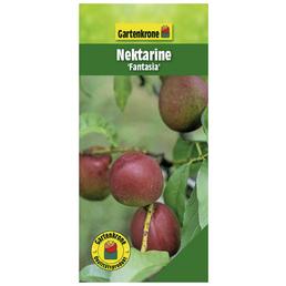 GARTENKRONE Nektarine, Prunus persica var. Nucipersica »Fantasia«, Früchte: süß, zum Verzehr geeignet