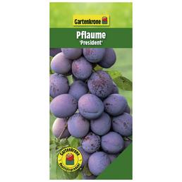 GARTENKRONE Pflaume, Prunus domestica »President«, Früchte: süß-säuerlich, zum Verzehr geeignet