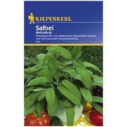 KIEPENKERL Salbei officinalis Salvia