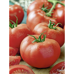 GARTENKRONE Tomate esculentum var. esculentum Lycopersicon »Harzfeuer«